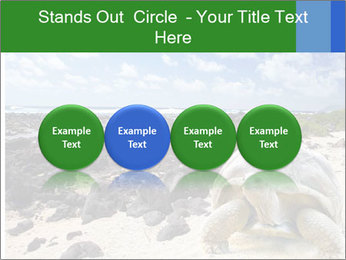 Rocks And Turtle PowerPoint Template - Slide 76