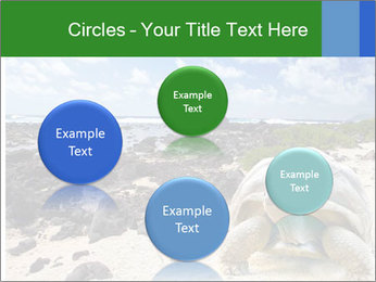 Rocks And Turtle PowerPoint Template - Slide 77