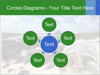 Rocks And Turtle PowerPoint Template - Slide 78