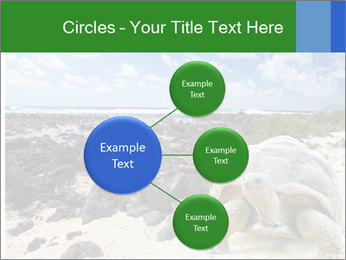 Rocks And Turtle PowerPoint Template - Slide 79