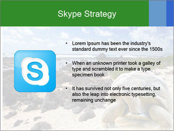 Rocks And Turtle PowerPoint Template - Slide 8