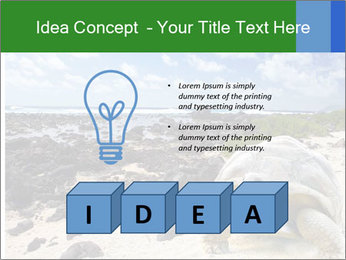 Rocks And Turtle PowerPoint Template - Slide 80