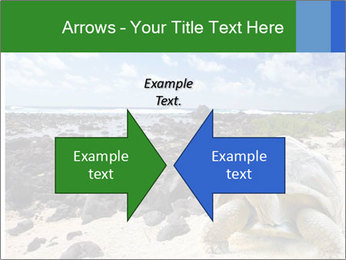 Rocks And Turtle PowerPoint Template - Slide 90