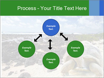 Rocks And Turtle PowerPoint Template - Slide 91