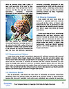 0000088994 Word Template - Page 4