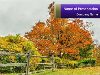 Orange Tree Leaves PowerPoint Template - Slide 1