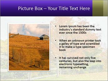 Orange Tree Leaves PowerPoint Template - Slide 13