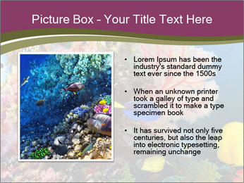 Colorful Corals PowerPoint Template - Slide 13