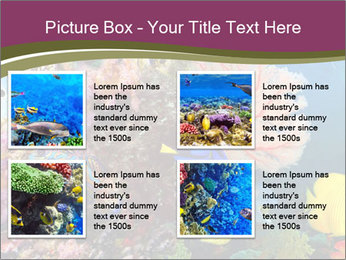 Colorful Corals PowerPoint Template - Slide 14