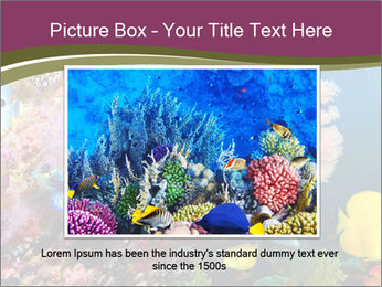 Colorful Corals PowerPoint Templates - Slide 15