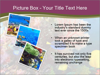 Colorful Corals PowerPoint Templates - Slide 17