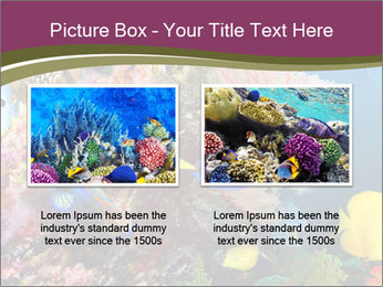 Colorful Corals PowerPoint Template - Slide 18