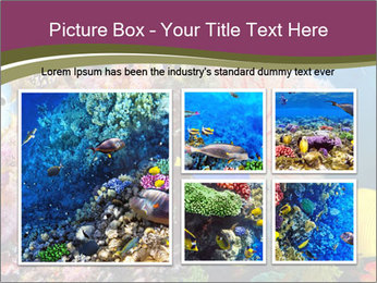 Colorful Corals PowerPoint Templates - Slide 19