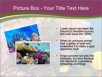 Colorful Corals PowerPoint Template - Slide 20