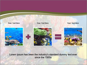 Colorful Corals PowerPoint Templates - Slide 22