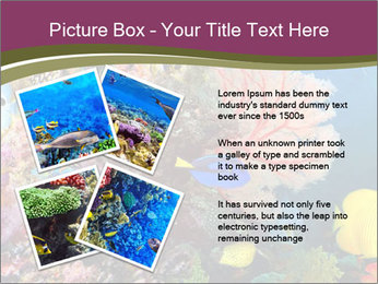 Colorful Corals PowerPoint Template - Slide 23