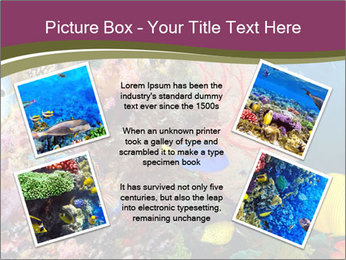 Colorful Corals PowerPoint Template - Slide 24