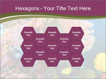 Colorful Corals PowerPoint Template - Slide 44