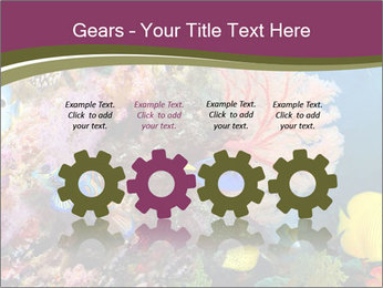 Colorful Corals PowerPoint Templates - Slide 48