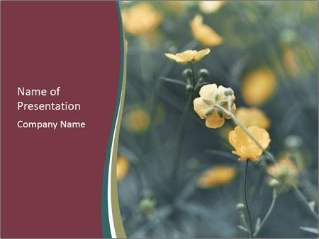 Flowerd In Medow PowerPoint Template