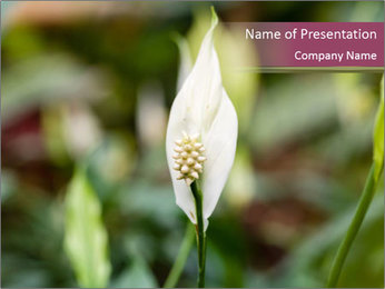White Lily PowerPoint Template - Slide 1