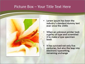 White Lily PowerPoint Template - Slide 13
