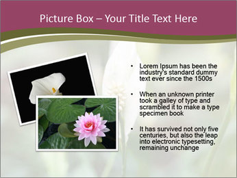 White Lily PowerPoint Template - Slide 20