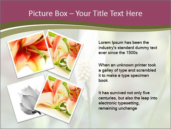White Lily PowerPoint Template - Slide 23