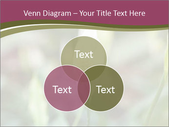 White Lily PowerPoint Template - Slide 33