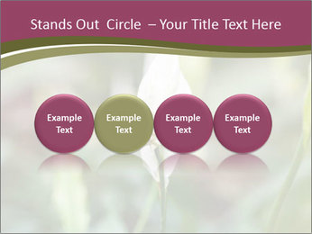 White Lily PowerPoint Template - Slide 76