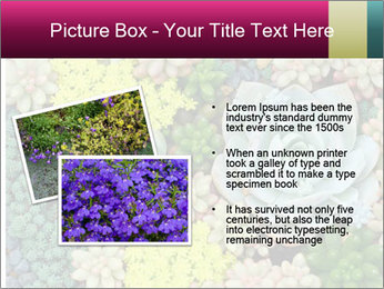 Botanical Composition PowerPoint Template - Slide 20
