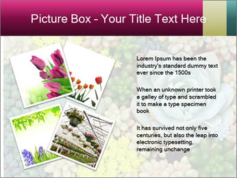 Botanical Composition PowerPoint Templates - Slide 23