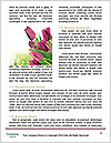 0000089098 Word Template - Page 4