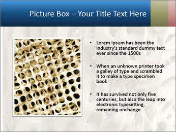 Osteoporosis PowerPoint Template - Slide 13