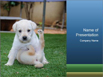 White Puppy PowerPoint Template - Slide 1
