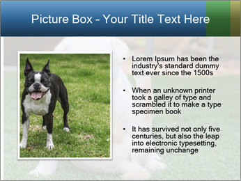 White Puppy PowerPoint Template - Slide 13