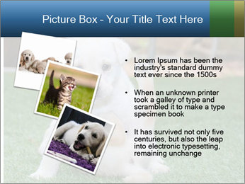 White Puppy PowerPoint Template - Slide 17