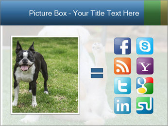 White Puppy PowerPoint Template - Slide 21