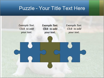 White Puppy PowerPoint Templates - Slide 42