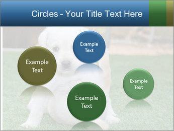 White Puppy PowerPoint Templates - Slide 77