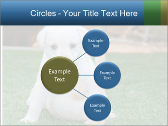 White Puppy PowerPoint Template - Slide 79
