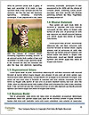 0000089155 Word Templates - Page 4