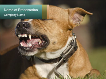 Aggressive Dog PowerPoint Template - Slide 1