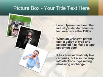 Aggressive Dog PowerPoint Template - Slide 17