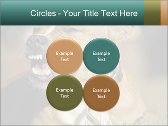Aggressive Dog PowerPoint Template - Slide 38
