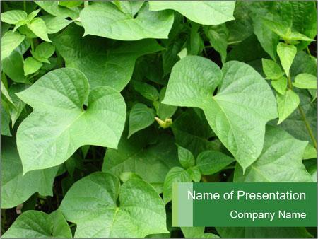 Green Foliage In Garden PowerPoint Template