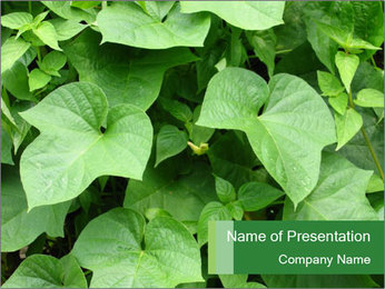 Green Foliage In Garden PowerPoint Template - Slide 1