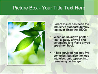 Green Foliage In Garden PowerPoint Template - Slide 13