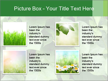 Green Foliage In Garden PowerPoint Template - Slide 14