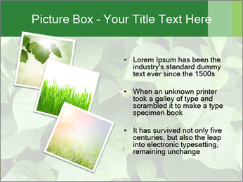 Green Foliage In Garden PowerPoint Template - Slide 17